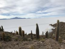 Остров Inkawasi в Uyuni Боливия, Южная Америка Стоковые Фото