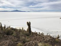 Остров Inkawasi в Uyuni Боливия, Южная Америка Стоковые Изображения