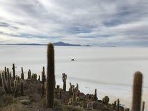 Остров Inkawasi в Uyuni Боливия, Южная Америка Стоковая Фотография RF