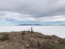 Остров Inkawasi в Uyuni Боливия, Южная Америка Стоковые Фотографии RF