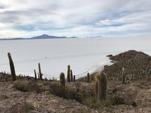 Остров Inkawasi в Uyuni Боливия, Южная Америка Стоковое фото RF