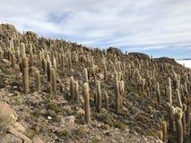 Остров Inkawasi в Uyuni Боливия, Южная Америка Стоковая Фотография