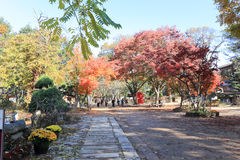 Остров Namiseom в осени Стоковое Фото