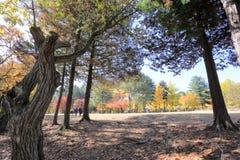 Остров Namiseom в осени Стоковая Фотография RF