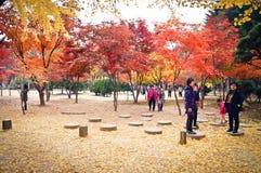 Остров Namiseom кленовый лист Стоковое Изображение