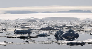 остров ross Антарктики Стоковое Фото