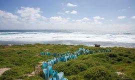 Остров Rottnest: Консервация стоковые фото
