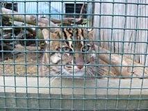 остров samos Греции рыболовства кота Стоковое Фото