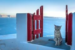 Остров Santorini, Греция: Деталь ориентир ориентира строба с красивым котом над кальдерой кальдеры стоковые фотографии rf