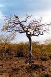 Остров Soqotra Стоковая Фотография RF
