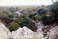 Остров Soqotra Стоковые Изображения RF