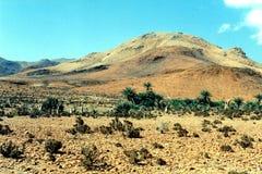 Остров Soqotra Стоковое Изображение RF