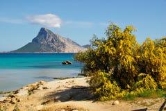 Остров Tavolara Стоковые Изображения RF