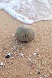 остров tristan Стоковая Фотография RF