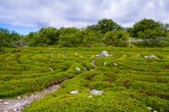 Остров Zayatsky, архипелаг Solovetsky Стоковое фото RF