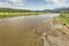 Острорылый крокодил, Коста-Рика Стоковая Фотография