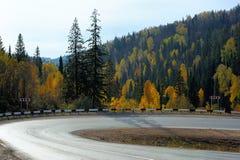 Острый загиб дороги в лесе осени Стоковая Фотография RF