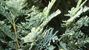 Острый зеленый цвет Стоковые Фотографии RF