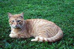 Осуждая кот Стоковая Фотография