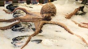 Осьминог и свежие рыбы Стоковое Фото