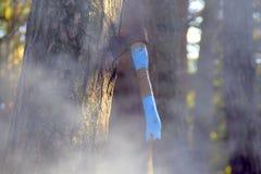 Ось высекаенная в древесине стоковое изображение rf