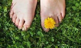 Ослабьте в саде, f Стоковые Изображения
