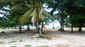Ослабьте на кокосовой пальме стоковое изображение rf