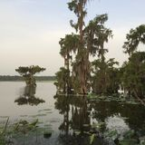 Ослабьте на озере Мартине, Луизиане среди красивых кипарисов Стоковое фото RF