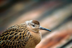 Ослабленное море полета птицы и сидеть на палубе корабля Стоковое Фото