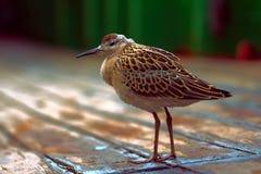 Ослабленное море полета птицы и сидеть на палубе корабля Стоковое Изображение RF