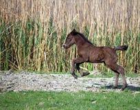 Осленок бежать на поле Стоковая Фотография RF