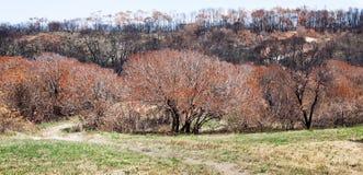 Отава лесного пожара Стоковые Изображения RF