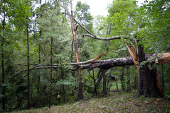 Отава урагана Катрины стоковые изображения rf