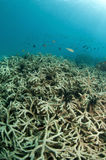 отбеленный коралл Стоковая Фотография