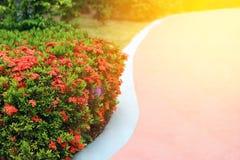 Отборный фокус, цветок шипа в спортивной площадке с влиянием пирофакела объектива Стоковое Изображение