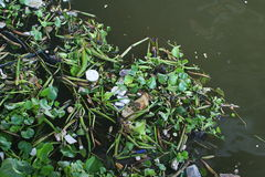 Отброс в реке Стоковое фото RF