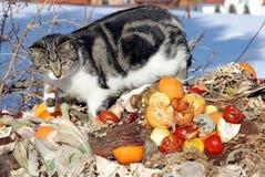 отброс кота Стоковая Фотография RF