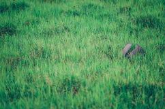 Отброс на траве Стоковое Изображение RF