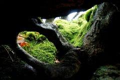 Отверстие в корнях Стоковые Фотографии RF