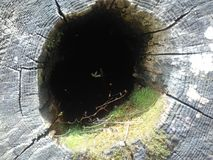 Отверстие дерева Стоковые Изображения