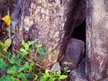 Отверстие ствола дерева низкопробное, малый расти зеленого растения Стоковое Фото