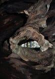 Отверстие ствола дерева Стоковое фото RF