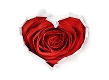 Отверстие формы сердца с красной розой дня валентинок через бумагу стоковая фотография