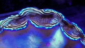 Отверстие clam Derasa сток-видео