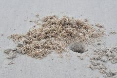 Отверстие ` s краба моря на пляже стоковая фотография rf