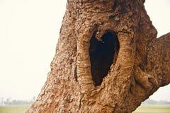 Отверстия формы любов внутри частей дерева стоковые фото
