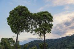 Ответная часть деревьев Стоковое Изображение RF