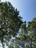 Отделения банка, тень большого дерева в парке стоковое фото