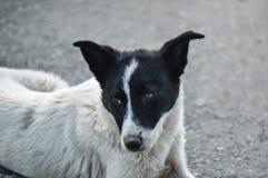 Отдыхать бездомной собаки Стоковое Изображение RF