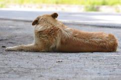 Отдыхать бездомной собаки Стоковое Изображение